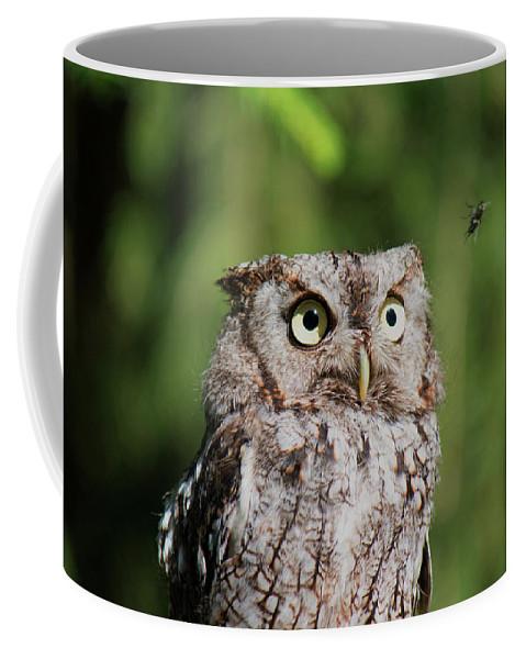 Eastern Screech Owl Coffee Mug featuring the photograph Eye On The Fly by CJ Park