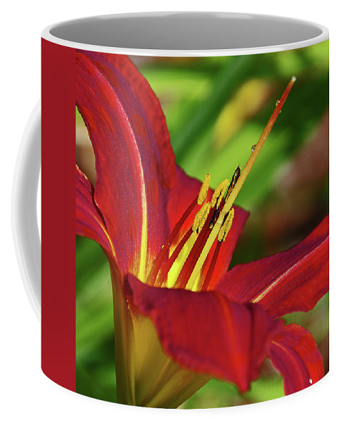Flower Coffee Mug featuring the photograph Facing The Sun by Deborah Bowie