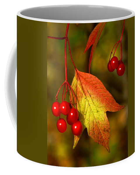 Fruit Coffee Mug featuring the photograph Fall Berries by Bill Morgenstern