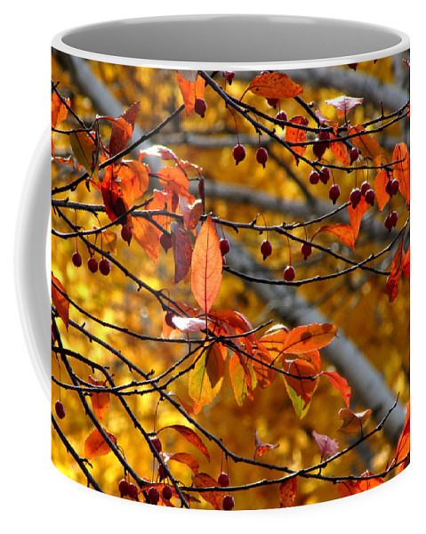 Fall Coffee Mug featuring the photograph Fall Berries II by Joni Moseng