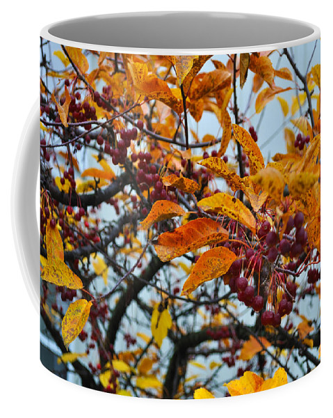 Berries Coffee Mug featuring the photograph Fall Berries by Tim Nyberg