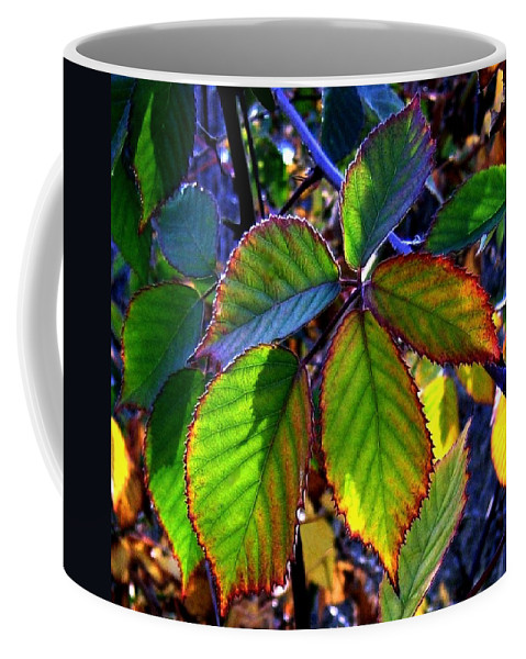 Fall Coffee Mug featuring the photograph Fall Blackberry by Will Borden