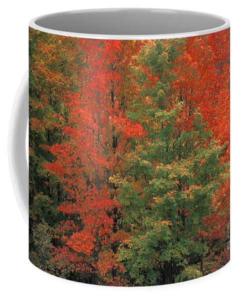 Door County Coffee Mug featuring the photograph Fall Brilliance by Sandra Bronstein