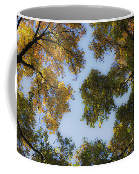 Fall Coffee Mug featuring the photograph Fall Canopy In Virginia by Teresa Mucha