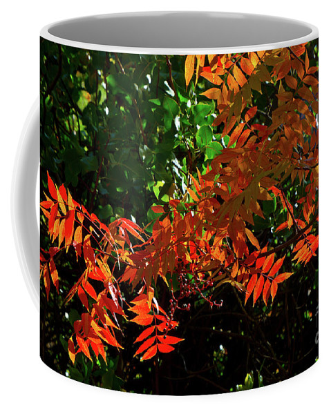 Boyce Thompson Arboretum Coffee Mug featuring the photograph Fall Comes to the Desert by Kathy McClure