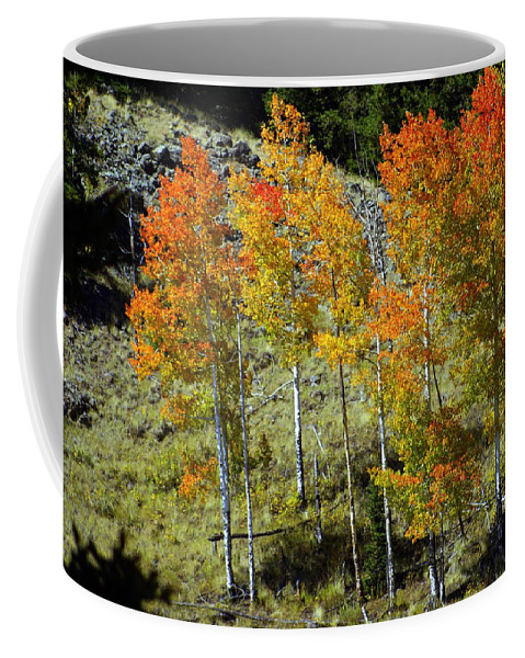Coffee Mug featuring the photograph Fall In Colorado by Marty Koch