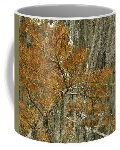 Cedar Coffee Mug featuring the photograph Fall In The Swamp by James Ekstrom