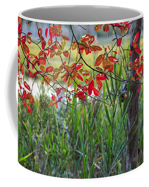 Terry D Photography Coffee Mug featuring the photograph Fall Is Upon Us by Terry DeLuco