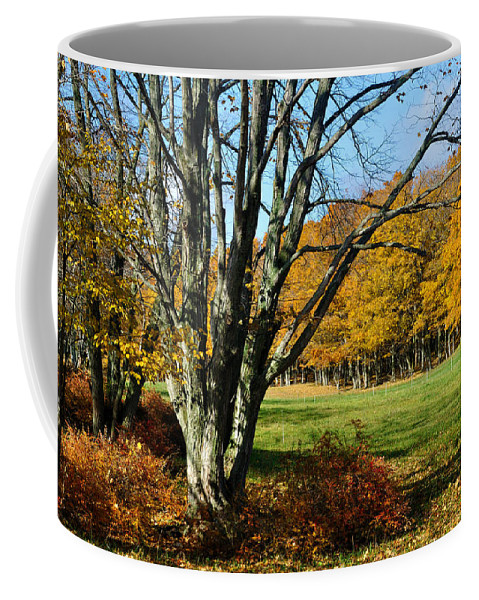 Trees Coffee Mug featuring the photograph Fall Pasture by Tim Nyberg