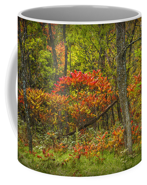 Art Coffee Mug featuring the photograph Fall Sumac Trees With Red Leaves In A Michigan Forest During Autumn by Randall Nyhof