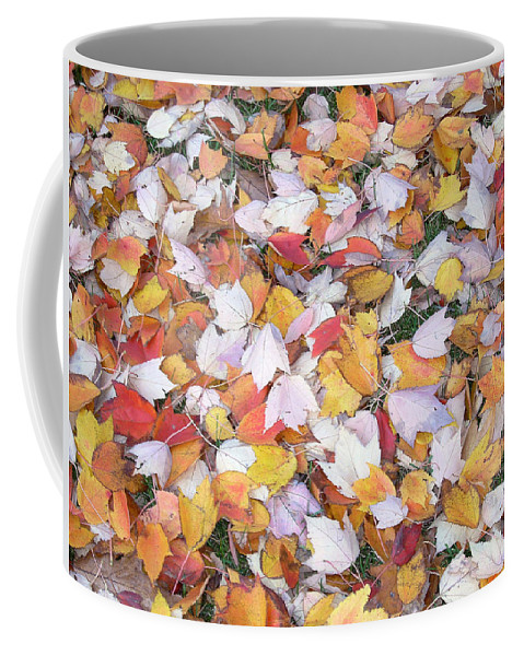 Photography Fall Autum Leaves Coffee Mug featuring the photograph Fallen Fantasy by Karin Dawn Kelshall- Best