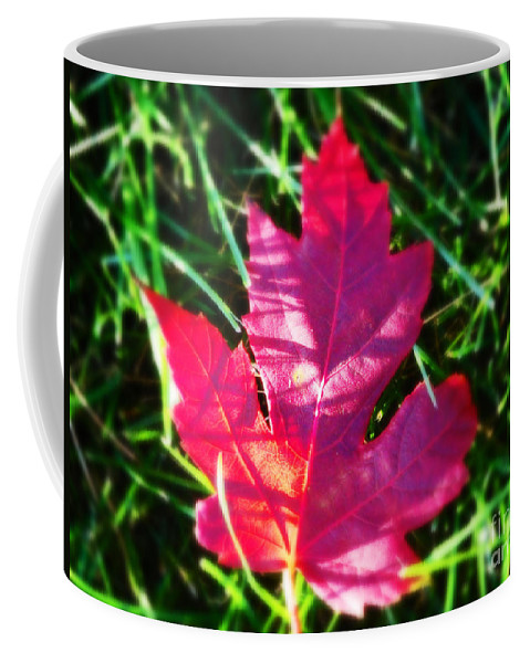 Nature Coffee Mug featuring the photograph Fallen Maple Leaf by Don Baker