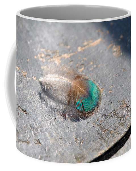 Peacock Coffee Mug featuring the photograph Fallen Peacock Feather by Louise Heusinkveld