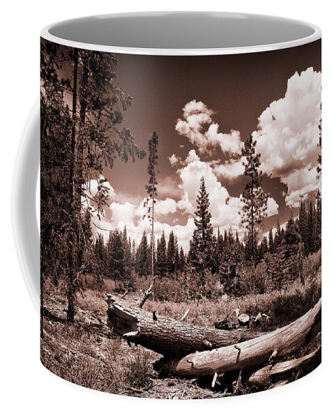 Tree Coffee Mug featuring the photograph Fallen Trees by Mick Burkey