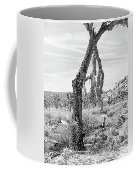 Joshua Tree Coffee Mug featuring the photograph Falling Joshua Tree Branch by Alex Snay
