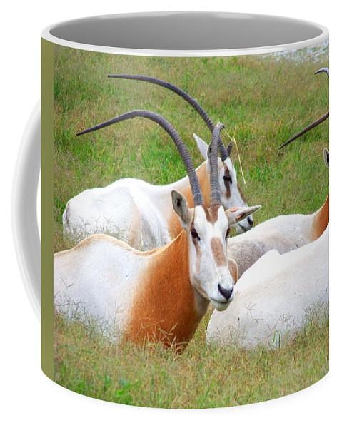 Antelope Coffee Mug featuring the photograph Family Gathering by Jai Johnson