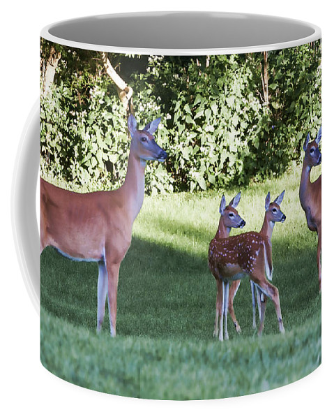 Deer Coffee Mug featuring the photograph Family Of 4 by Stephen Schwiesow