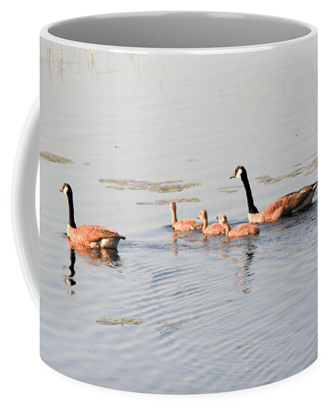 Canadian Geese Coffee Mug featuring the photograph Family Of Five by Linda Kerkau