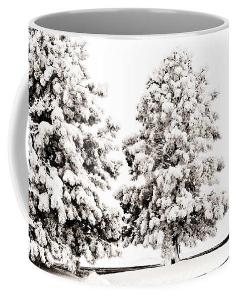 Trees Coffee Mug featuring the photograph Family Of Trees by Marilyn Hunt