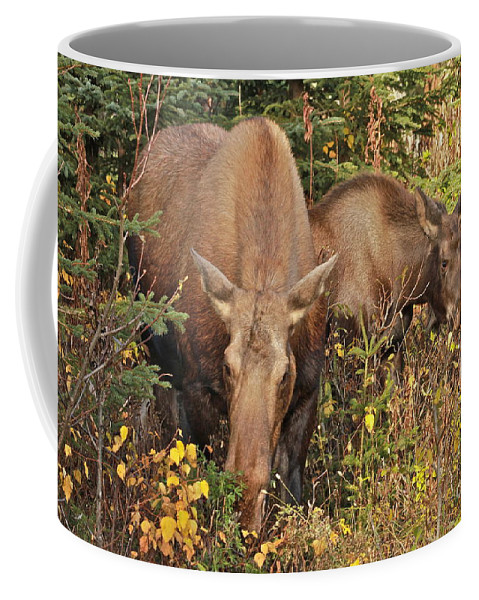 Moose Coffee Mug featuring the photograph Family Picnic by Rick Monyahan