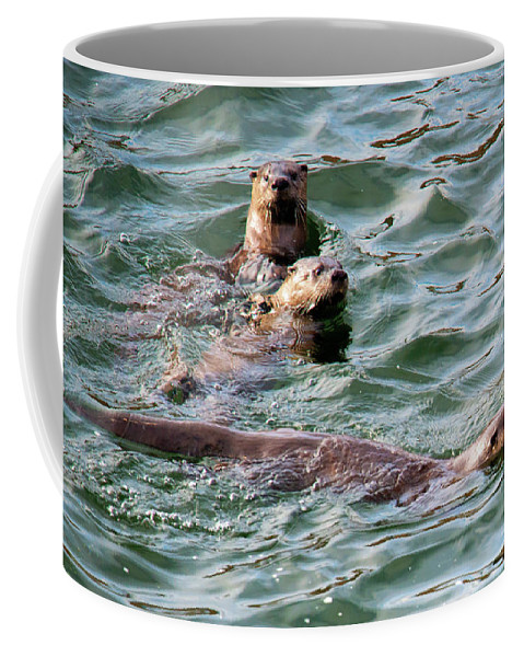 Otters Coffee Mug featuring the photograph Family Play Time by Mike Dawson