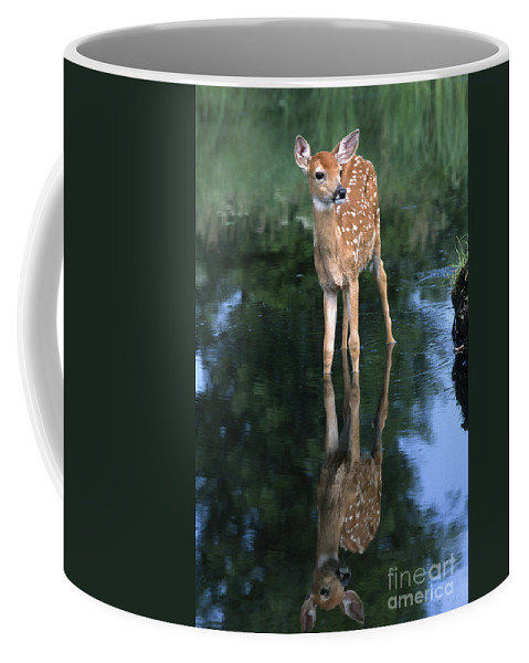 Deer Coffee Mug featuring the photograph Fawn Reflection by Sandra Bronstein