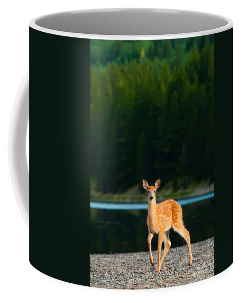 2006 Coffee Mug featuring the photograph Fawn by Sebastian Musial