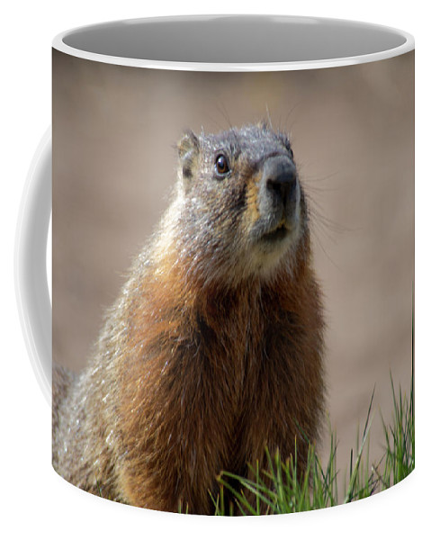 Wyoming Coffee Mug featuring the photograph Fearless by Frank Madia