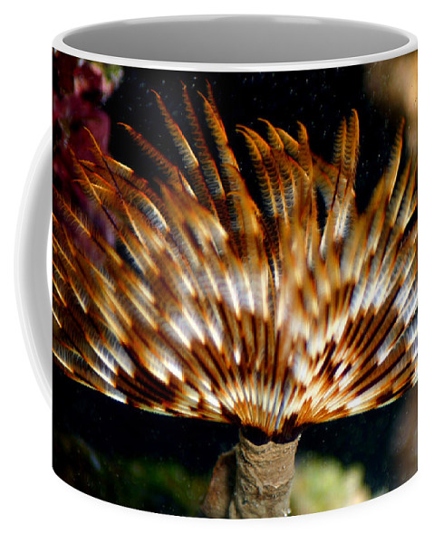 Feather Duster Coffee Mug featuring the photograph Feather Duster by Anthony Jones