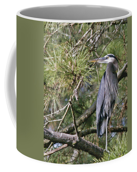 Bird Coffee Mug featuring the photograph Feathers by Phill Doherty