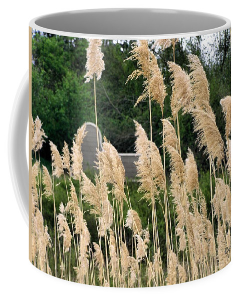 Weeds Coffee Mug featuring the photograph Feathers by Susan Kinney