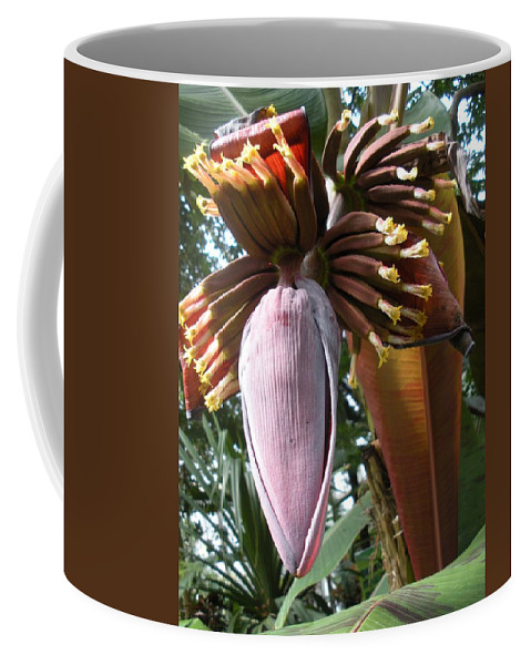 Plant Coffee Mug featuring the photograph Feed Me by Nelson Strong