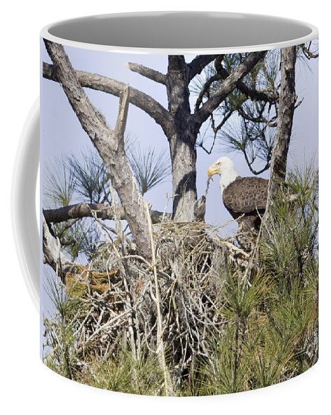 Eagles Coffee Mug featuring the photograph Feeding Little One by Deborah Benoit