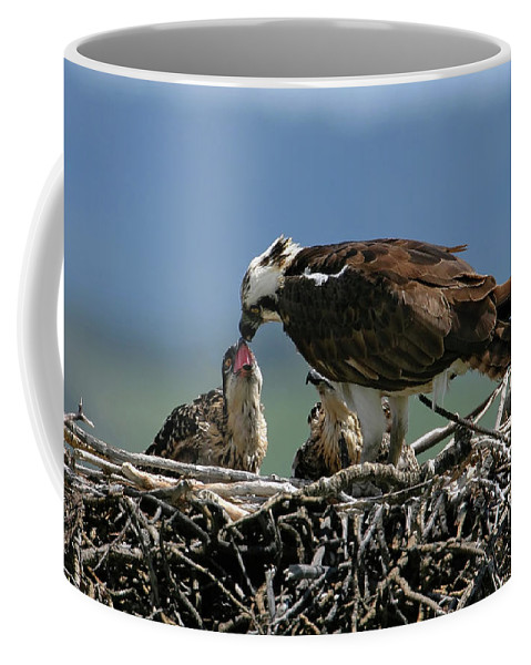 Osprey Coffee Mug featuring the photograph Feeding Time by Ronnie and Frances Howard