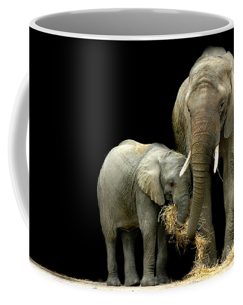 Elephant Coffee Mug featuring the photograph Feeding Time by Stephie Butler