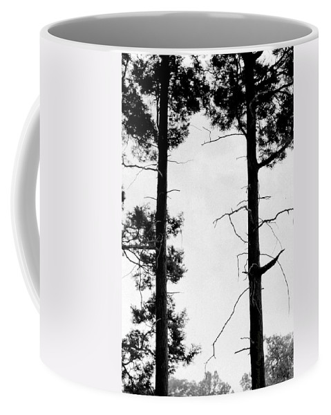 Trees Coffee Mug featuring the photograph Female And Male by Deborah Crew-Johnson