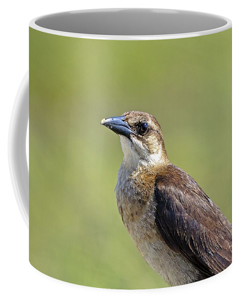Birds Coffee Mug featuring the photograph Female Grackle by Kenneth Albin