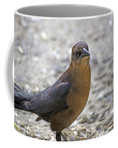 Grackle Coffee Mug featuring the photograph Female Grackle With Attitude by Kenneth Albin