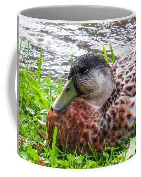 Beak Coffee Mug featuring the painting Female Mallard Duck Resting 4 by Jeelan Clark