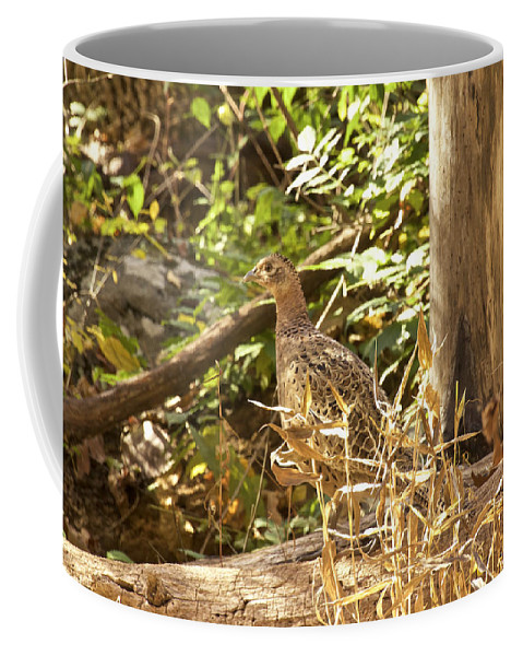 Bird Coffee Mug featuring the photograph Female Ring-necked Pheasant - Phasianus Colchicus by Mother Nature