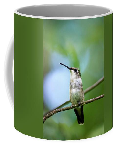 Female Coffee Mug featuring the photograph Female Ruby Throated Hummingbird by Christina Rollo