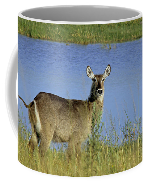 Africa Coffee Mug featuring the photograph Female Waterbuck by Tony Murtagh