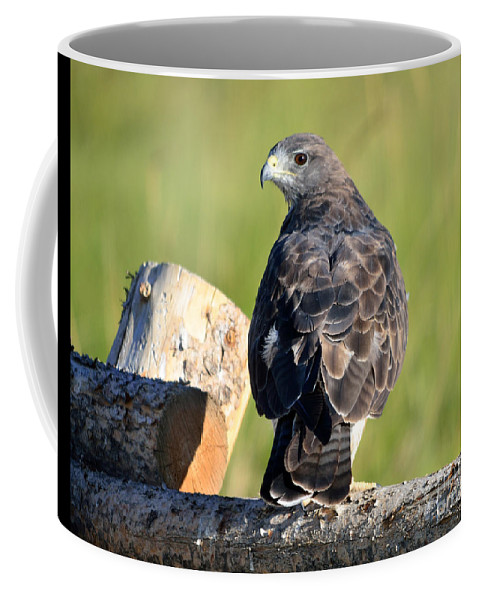 Swainson's Coffee Mug featuring the photograph Fence Sitter by Brad Christensen