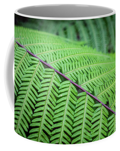Leaf Coffee Mug featuring the photograph Fern by Artisanal Photo