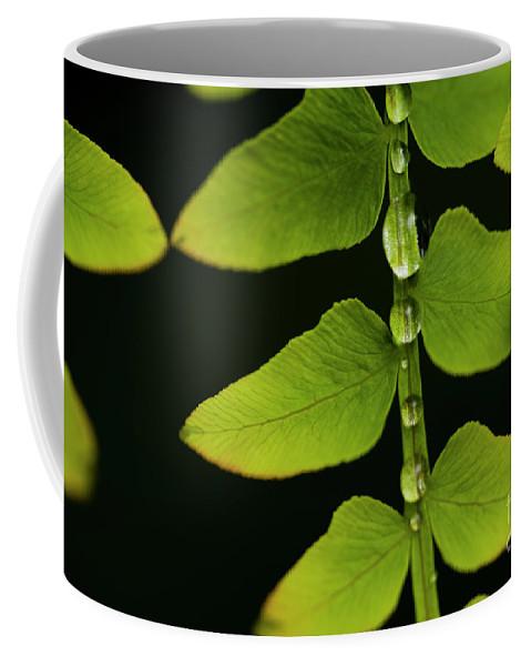 Bellevue Botanical Gardens Coffee Mug featuring the photograph Fern Close-up Nature Patterns by Jim Corwin