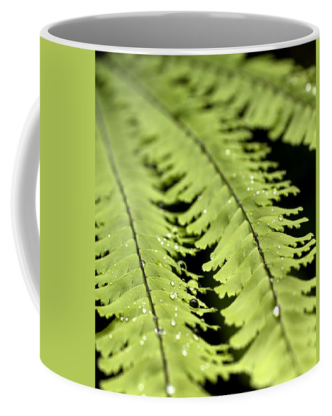 Ferns Coffee Mug featuring the photograph Fern by Jessica Wakefield