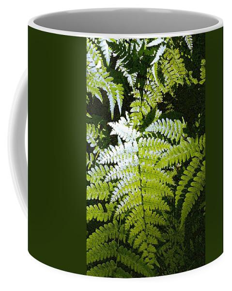 Ferns Coffee Mug featuring the photograph Ferns by Nelson Strong