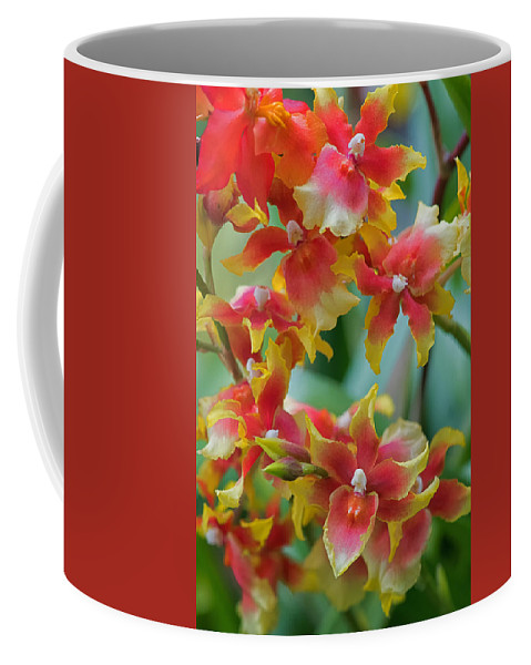 Abstract Coffee Mug featuring the photograph Festive Orchids by Zina Zinchik