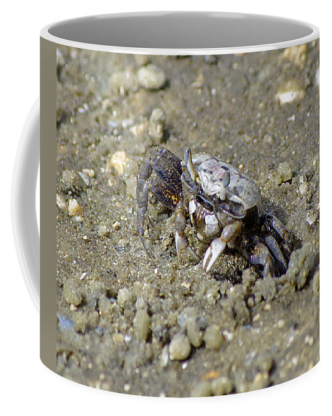 Fiddler Coffee Mug featuring the photograph Fiddling Around by Kenneth Albin