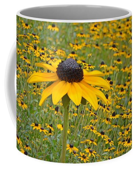 Coneflowers Coffee Mug featuring the photograph Field Of Coneflowers by Sandi OReilly
